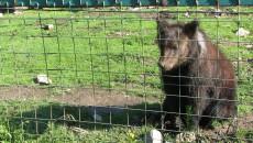 Záchranná stanice medvědů v Siněvirském národním parku